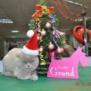 Котики тоже готовятся к празднику