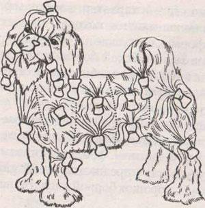 Расположение папильоток на теле мальтийской болонки