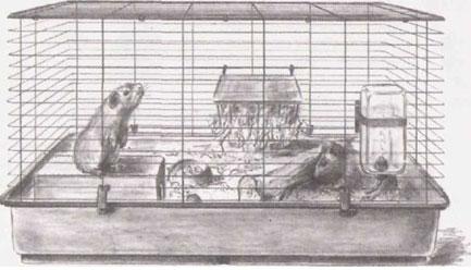 Клетки и вольеры для морских свинок